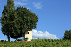 Vineyard with little house and cypress Stock Photography
