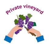 Vineyard logo in flat style Royalty Free Stock Image