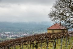 Vineyard and long lines of grapevines near the town. And a little house Stock Photography