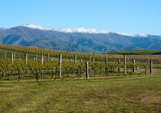 In a vineyard looking at mountains near Clyde and Alexandra in New Zealand royalty free stock photos