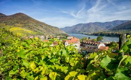Vineyard in Lower Austria Royalty Free Stock Images
