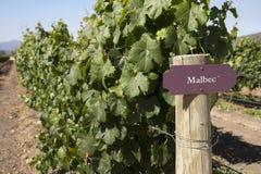 Vineyard - Malbec Royalty Free Stock Images