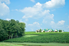 Vineyard Mansion royalty free stock photo