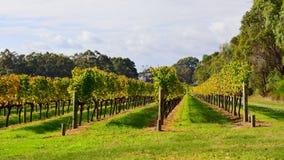 Vineyard at Margaret River, Australia Royalty Free Stock Photos