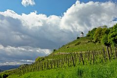 Vineyard in Maribor royalty free stock images