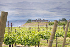 Vineyard in Maryhill Washington State Royalty Free Stock Image
