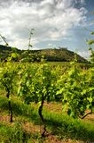 Vineyard and medieval ruin Stock Images