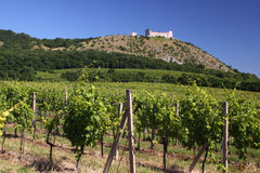 Vineyard and medieval ruins Royalty Free Stock Image