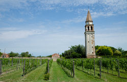Vineyard on Mediteranean island near Venice, Italy. Goghic chapel at vineyard on Mediteranean island near Venice, Italy Royalty Free Stock Photo