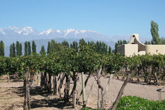 Vineyard Mendoza Stock Photography