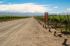 Vineyard in Mendoza Argentina Stock Photography