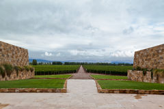 Vineyard Mendoza Argentina Royalty Free Stock Photo