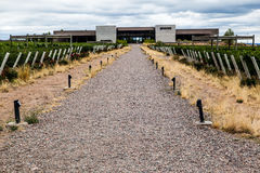 Vineyard Mendoza Argentina Royalty Free Stock Images