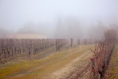 Vineyard in the mist Stock Photography