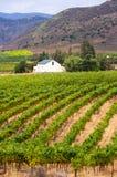Vineyard,Montagu,South Africa Stock Image