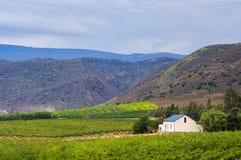 Vineyard,Montagu,South Africa Royalty Free Stock Photo