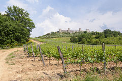 Vineyard in Monteriggioni Tuscany Stock Photography