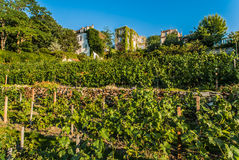 Vineyard of Montmartre paris city France Royalty Free Stock Photography