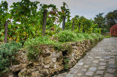 Vineyard in Montmartre on Rue des Saules in Paris Stock Photos