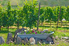 Vineyard, Mosel Valley Stock Photo