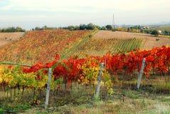 Vineyard in mountain Royalty Free Stock Photo
