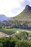 Vineyard and mountain peak Stock Photography