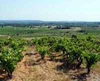 Vineyard and mountain views Stock Photos