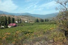 Vineyard in mountains Royalty Free Stock Photo