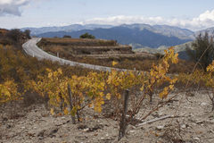 Vineyard in the mountains Royalty Free Stock Photos