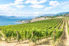 Vineyard mountains lake and blue sky summer landscape in beautiful Okanagan Valley, BC, Canada royalty free stock photo