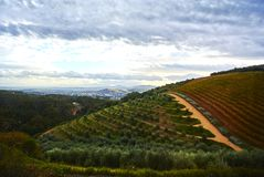 Vineyard mountains in Stellenbosch valley South-Africa. Stellenbosch is a town in the Western Cape province of South Africa, situated about 50 kilometres &#x28 stock photography