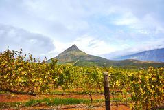 Vineyard mountains in Stellenbosch valley South-Africa. Stellenbosch is a town in the Western Cape province of South Africa, situated about 50 kilometres &#x28 stock photos