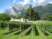 Vineyard and mountains in switzerland Royalty Free Stock Image