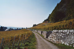 Vineyard on mountainside Stock Photos