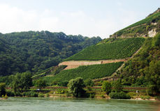 Vineyard on a mountainside. Vineyard on a mountain slope in Rhine valley stock photos