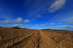 Vineyard with moving clouds in Aude, France Royalty Free Stock Photo