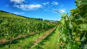 Vineyard. Mudbrick vineyard, waiheke island, new zealand Stock Image