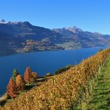 Vineyard and multi colored trees at lake Walensee, Switzerland. Stock Images