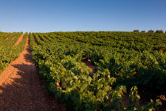 Vineyard in Najera Stock Photos