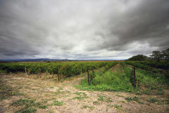 Vineyard in Napa, California Stock Photo
