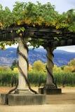 Vineyard Napa in California. Stock Image