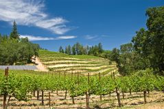 Vineyard in Napa, California Royalty Free Stock Photo