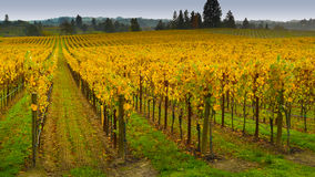 Vineyard in Napa Valley Stock Photo