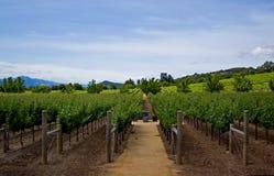 Vineyard in Napa Valley royalty free stock photography