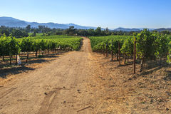 Vineyard in Napa Valley. San Francisco Bay Area in northern California. Napa Valley is the main wine growing region of the United States and one of the major Stock Photo
