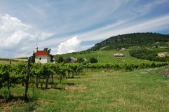 Vineyard near Balaton royalty free stock photos
