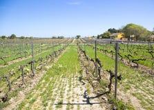 Vineyard near Barcelona Stock Photo