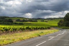 Vineyard near Carcassonne (France) royalty free stock photography