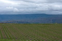 A Vineyard near Clyde and Alexandra in New Zealand royalty free stock photos