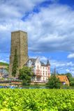 Vineyard near fortress Boosenburg, Ruedelsheim, Hessen, Germany Royalty Free Stock Photos